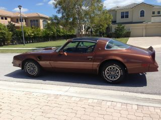 1978 Pontiac Trans Am 6.  6 Litre.  Immaculate Condition,  Show Car photo