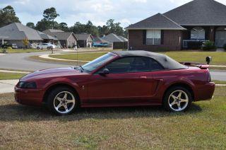2001 Ford Mustang Svt Cobra (convertible) photo