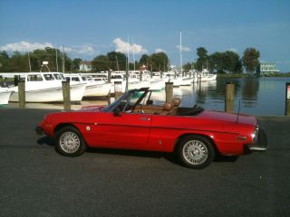 1978 Alfa Romeo Spider Niki Lauda Special Edition photo