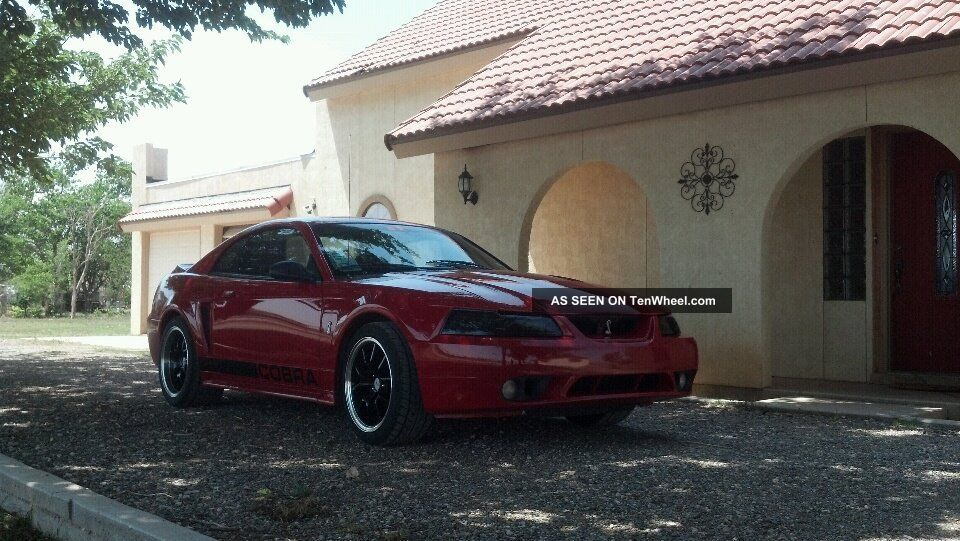 1999 Ford Mustang Svt Cobra Coupe 2 - Door 4.  6l Mustang photo
