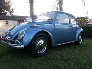 1966 Vw Bug photo