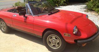 1982 Alfa Romeo Spider Veloce photo
