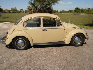 1965 Volkswagen Beetle Coupe photo
