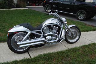 Harley Davidson Vrsca 2002 photo