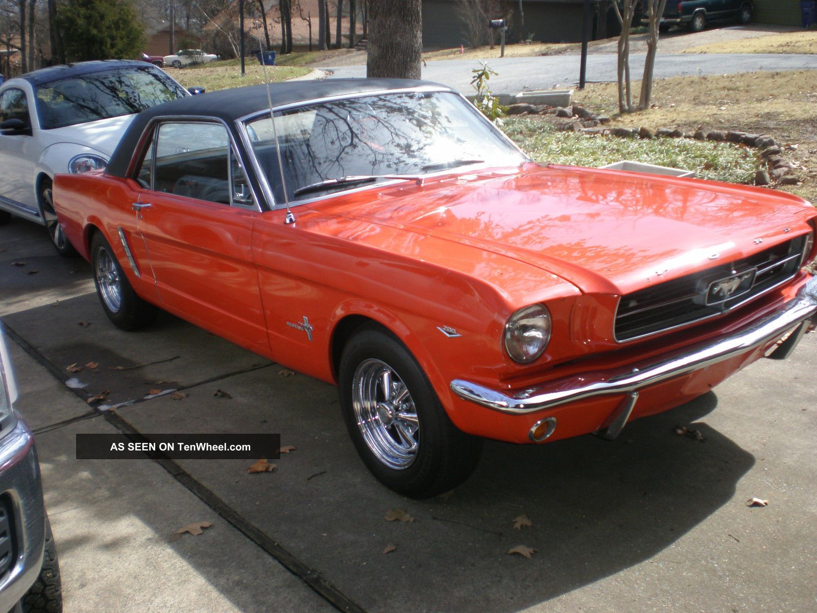 1965 Mustang 50th Anniversary Mustang photo